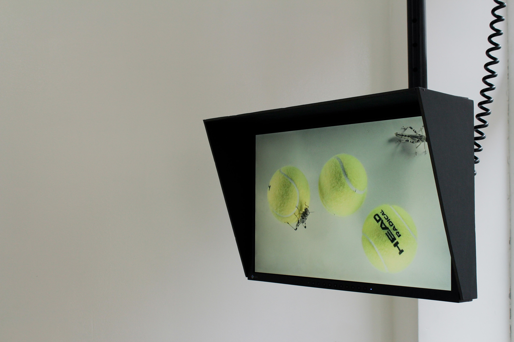 Simon Davenport Locusts and Tennis Balls