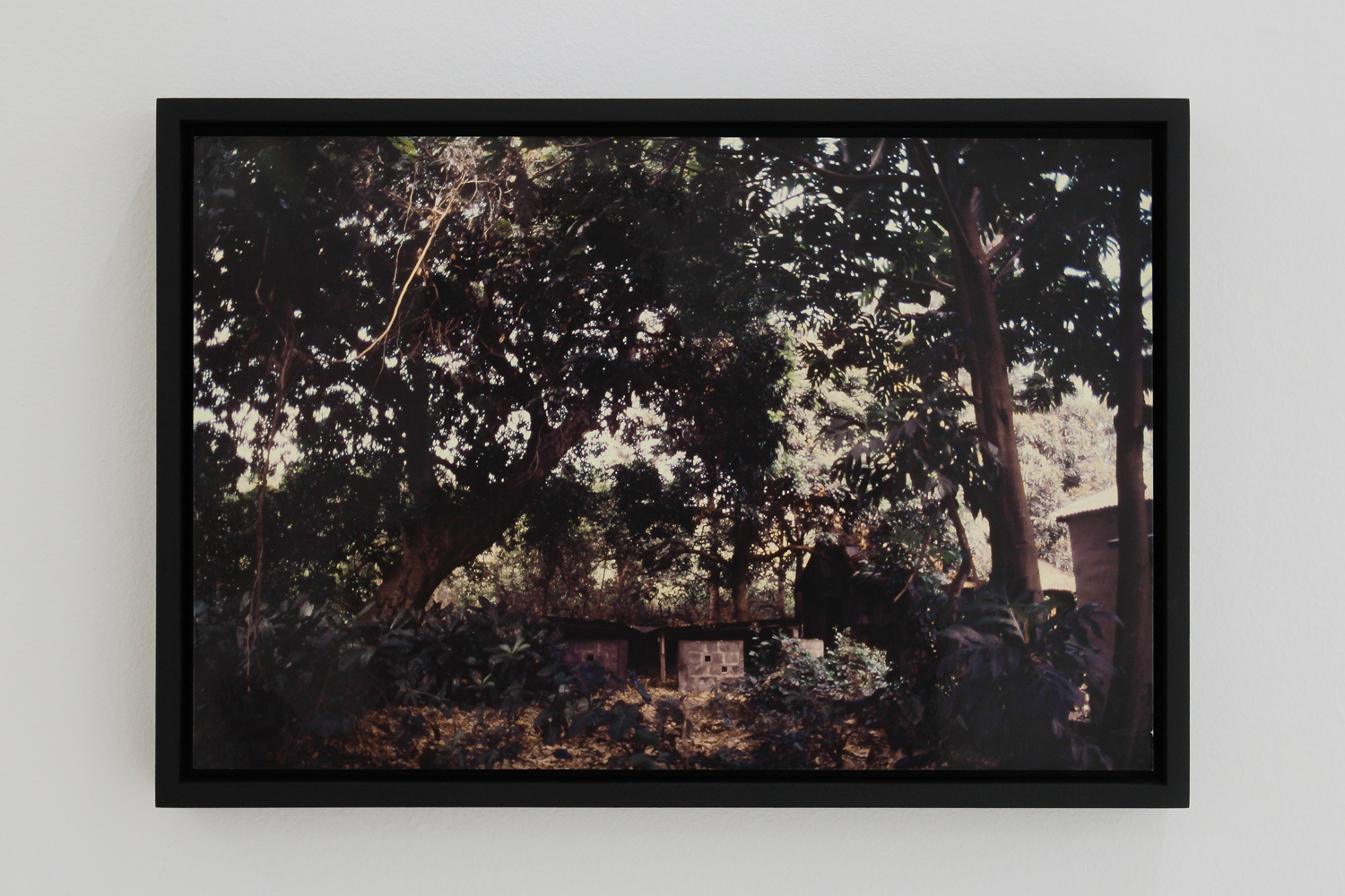 Brice Guilbert kari dodo Inkjet print from Jacques Guilbert photographs